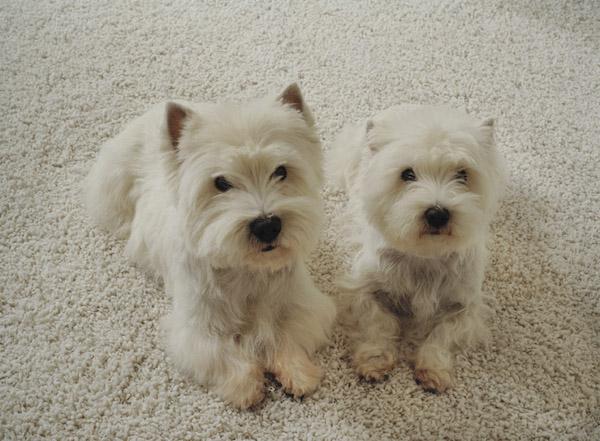 lifestyle-puppies